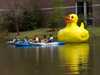 Students from the Enlivened Spaces class set up the duck in front of the UNF library.