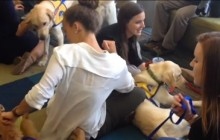 Adorable dogs to lower stress in UNF students