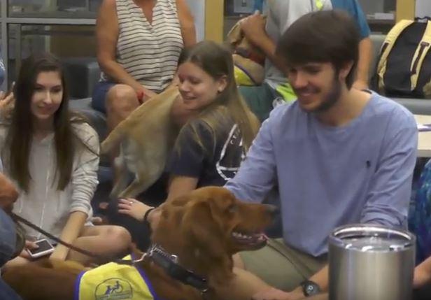 Cute pups make finals week bearable