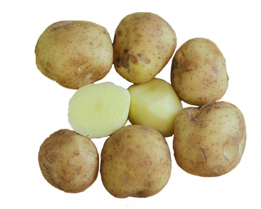 Potato_wiki