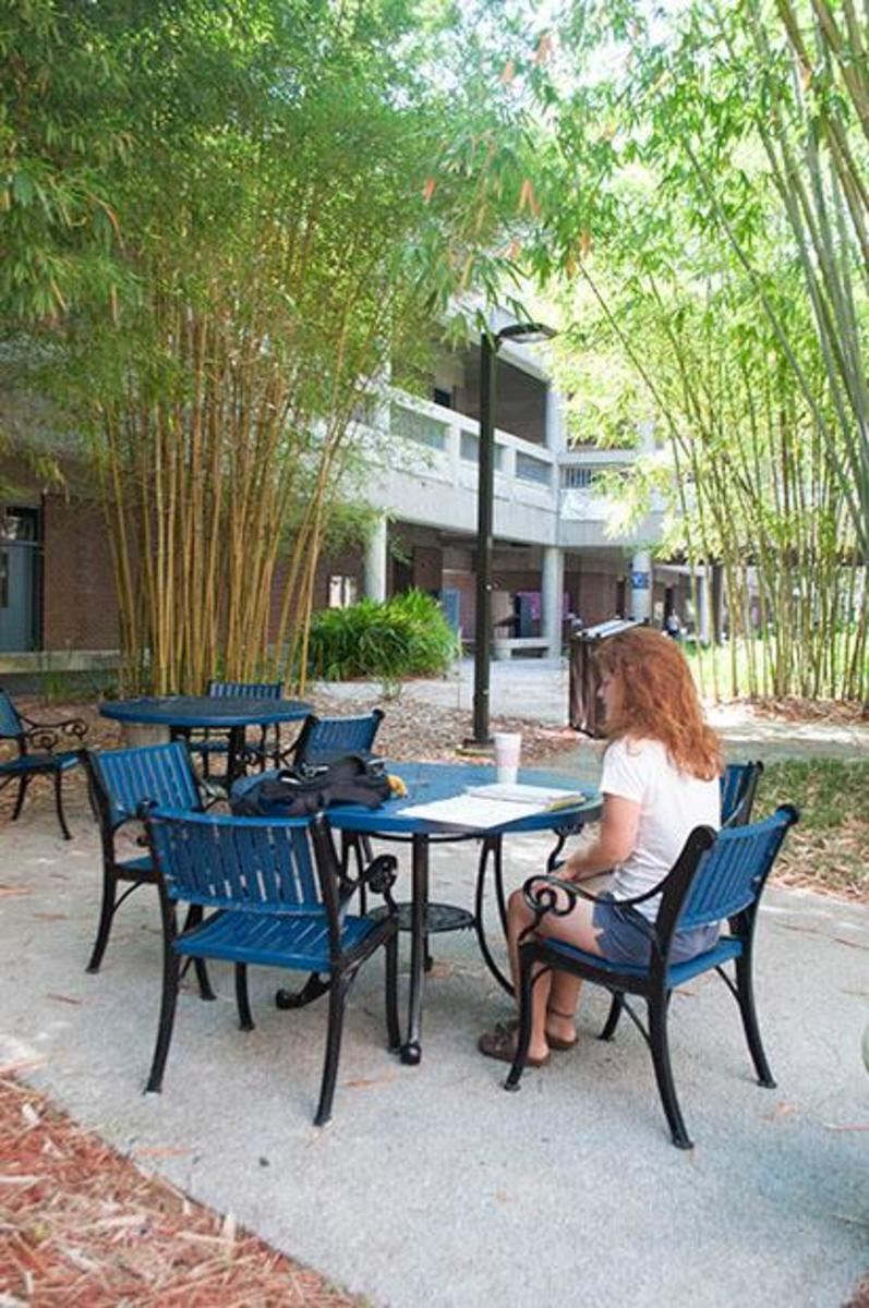 Nutrition and dietetics junior Mallory Schott does her reading in the bamboo garden. Photo by Jamie Barrett