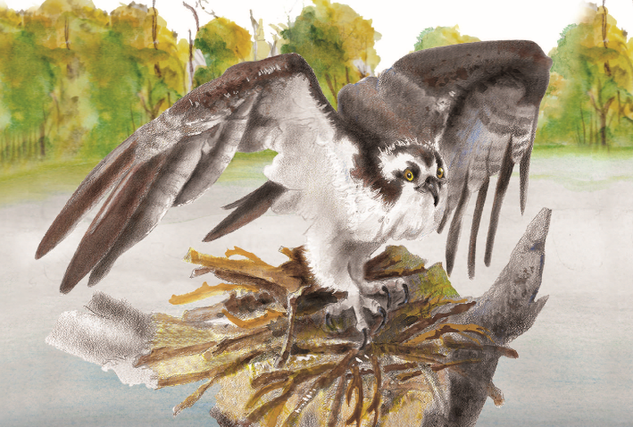 Children's book on UNF wildlife aims to spread awareness of local environment