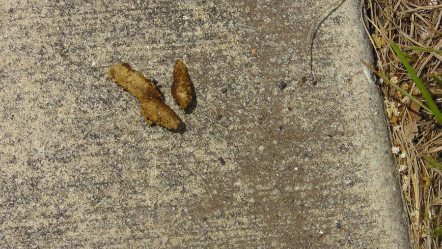 Often, dog poop is left unattended in the Flats. Photo by Ronnie Rogers