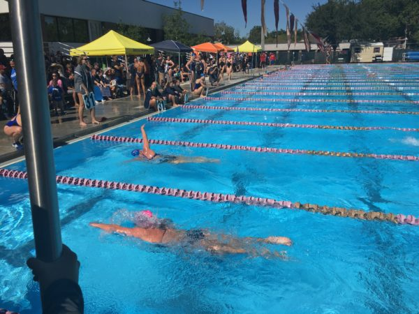 UNF Swimming. Photo by Al Huffman