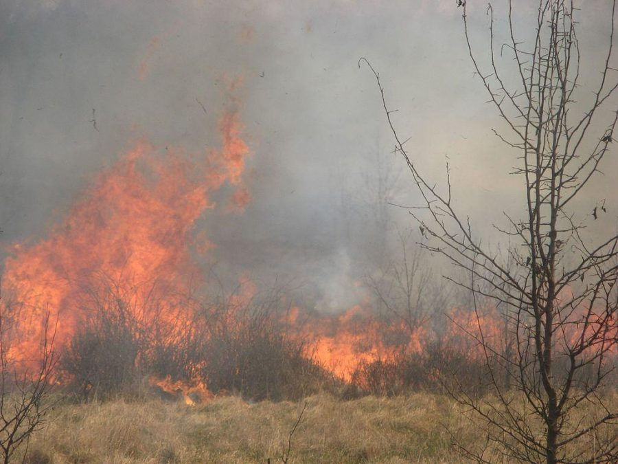 A controlled burn. Courtesy of Wikimedia Commons