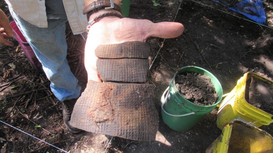 Archaeology students find artifacts in Big Talbot Island