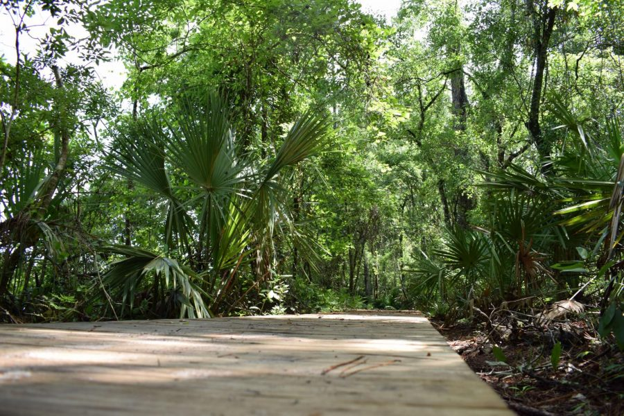 Inside look of UNF's nature trails