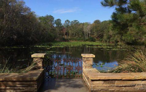 Jacksonville Arboretum & Gardens. Photo by Sarah Bethea.