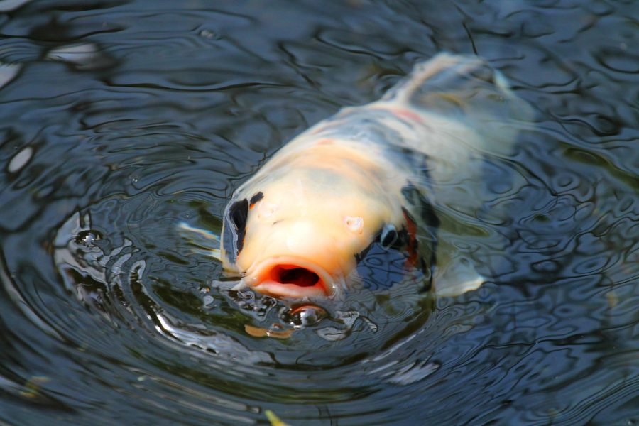 UNF nutritionist comments on the rising mercury levels in fish