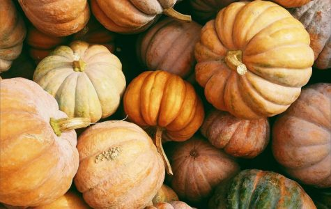"Jacksonville's oldest organic farm hosts a ""Farm Fall Festival"""