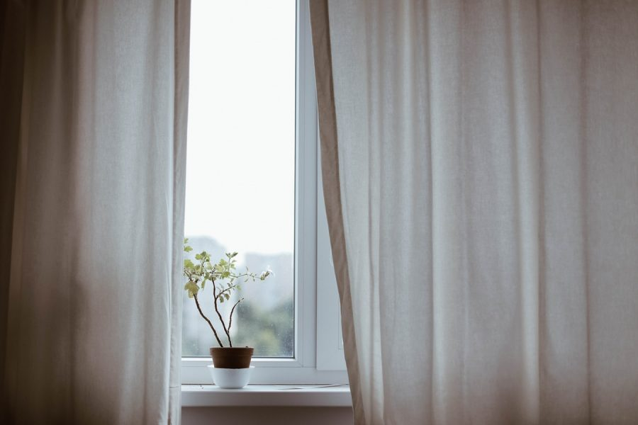 Photo of an indoor plant sitting on a windowsill