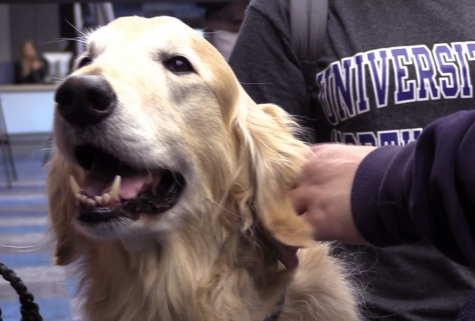 PAWS Your Stress gives students a pause during Finals Week