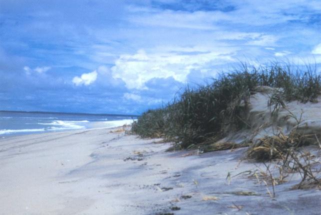 Jax beaches reopen Friday at 5 p.m.