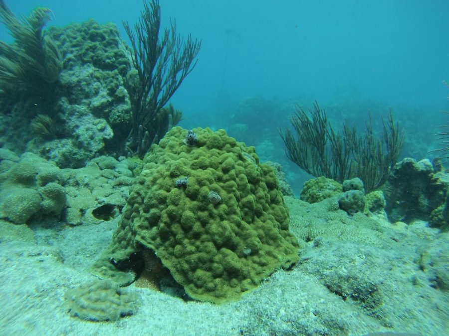 UNF professor discovers effects of red tide on coral