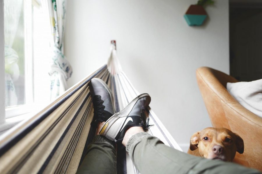 Photo of man laying on hammock with dog