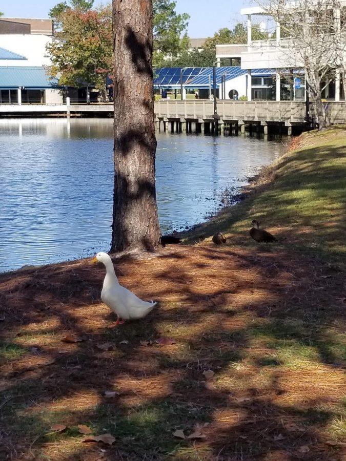 Howard the Duck. Photo credit Nathan Turoff.
