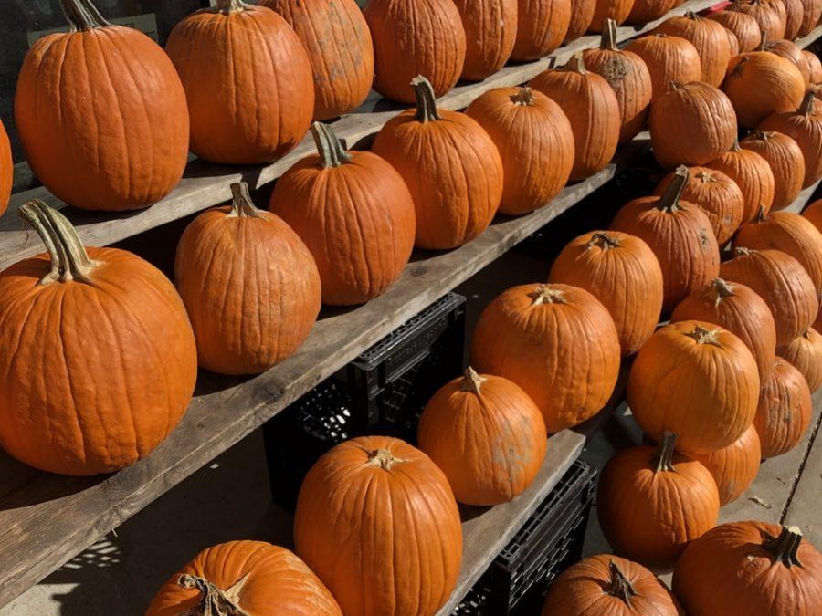 D.I.Y+lit+mason+jar+pumpkins