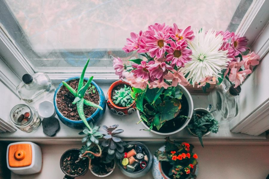How to take care of your low maintenance house plants
