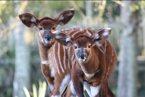 Photo credit Kori Odum, courtesy of Jacksonville Zoo and Gardens.