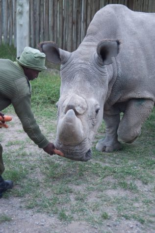 """""""The last male northern white rhino"""" by Jessica Leas Photography is licensed under CC BY-NC 2.0."""