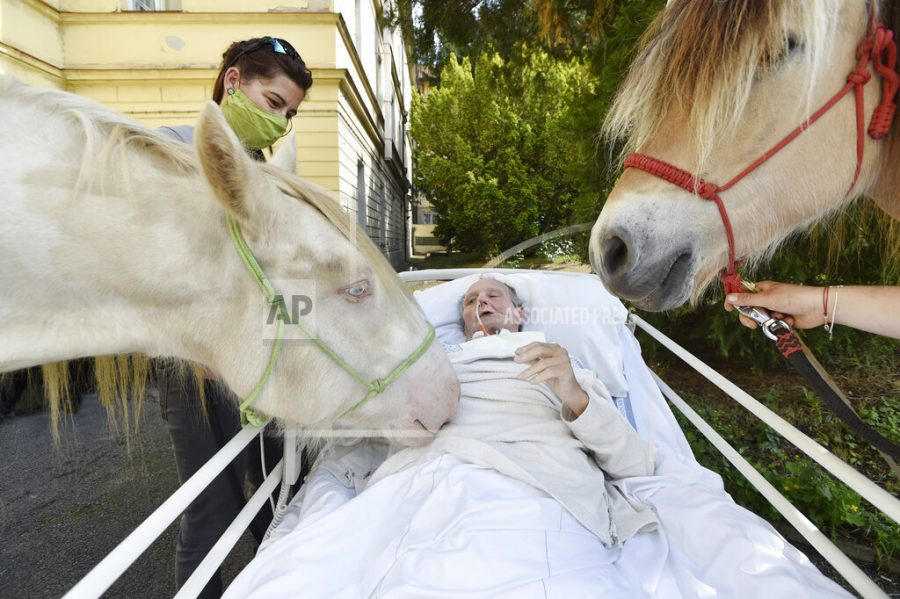 A patient of the hospice department strokes a horse within hippotherapy at the Hospital of the Sisters of Mercy of St. Borromeo in Prague, Czech Republic, on June 11, 2020. Hippotherapy, is therapy with the help of horses, helps hospice clients improve their psyche. Photo/Michaela Rihova (CTK via AP Images)